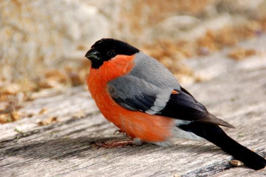 légende  image-quiz-Autour-des-oiseaux-générale