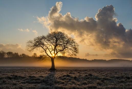 image-quiz-symbolique-arbres-générale